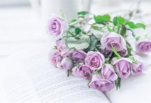 thumb2-purple-roses-flowers-on-a-book-roses-mood-background-with-roses